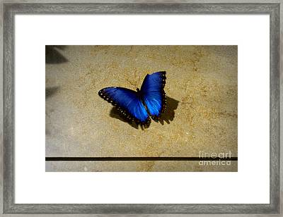 Flawed Beauti-fly Framed Print by Nicole Tru Photography