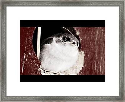 Fledgling Curiosity  Framed Print