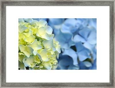 Fleur II Framed Print by George Crawford