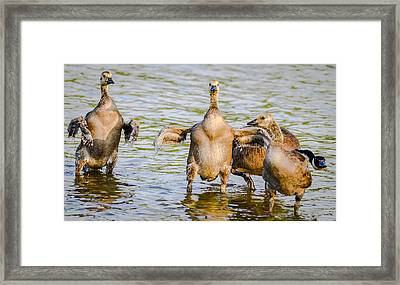 Flexing Framed Print by Brian Stevens