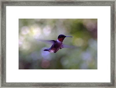 Flicker Framed Print by Victoria  Kurlinski