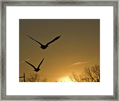 Flight At Sunset Framed Print by Edward Peterson