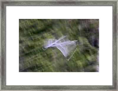 Flight Framed Print by Cathie Douglas