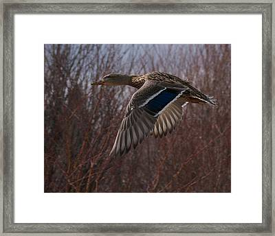 Flight Is Beautiful Framed Print