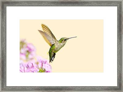Flight. Framed Print by Kelly Nelson