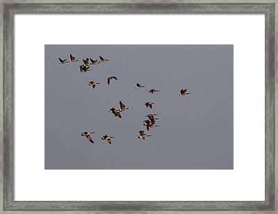 Flight - Near Evening Framed Print by Janice Adomeit