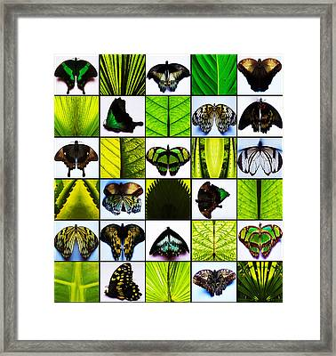Flight Of Fancy Framed Print by Fine Art  Photography