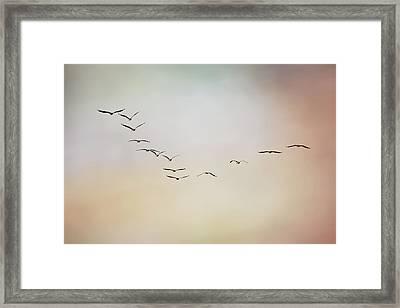 Flight Of Pelicans Framed Print by Daniela Duncan