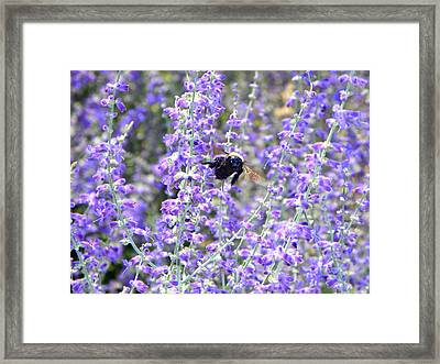 Flight Of The Bumble Bee Framed Print by Rhiannon Hamm