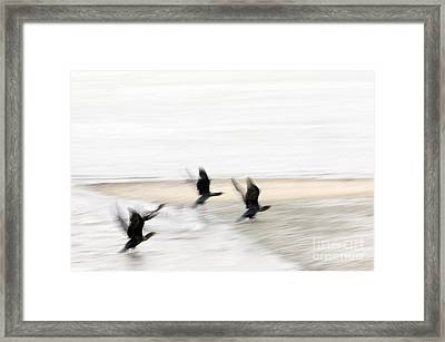 Flight Of The Cormorants Framed Print by David Lade
