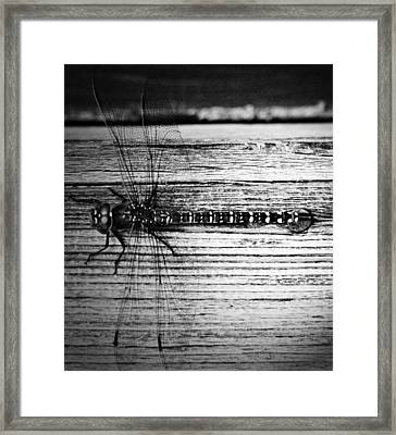 Flight Of The Dragoon Framed Print by Jerry Cordeiro