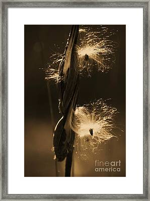 Flight Of The Milkweed Seed Framed Print by Julie Clements