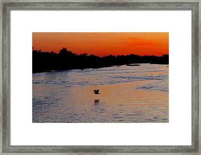 Framed Print featuring the photograph Flight Of The Turkey by Elizabeth Winter