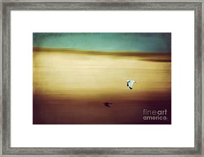 Flight Over The Beach Framed Print by Hannes Cmarits