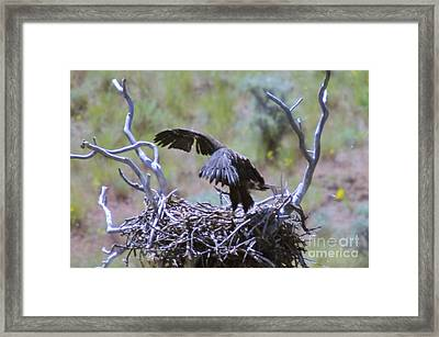 Flight School  Framed Print by Jeff Swan