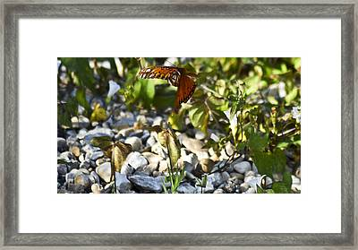 Flight Framed Print by Teresa Dixon