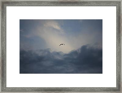 Framed Print featuring the photograph Flight To Heaven by Penny Meyers