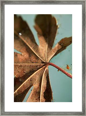 Floating And Drifting Framed Print