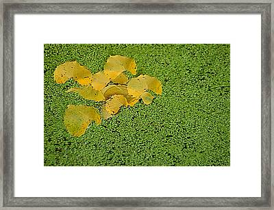 Framed Print featuring the photograph Floating Cottonwood Leaves by Peg Toliver