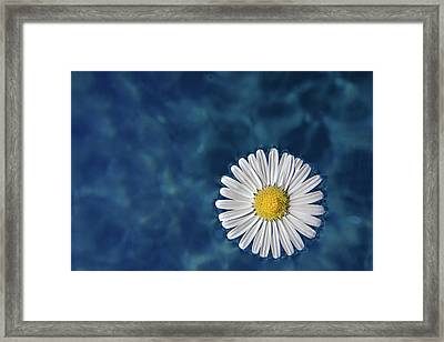 Floating Daisy Framed Print by Andrea Mucelli