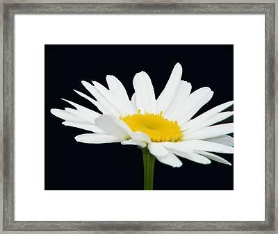 Floating Daisy Framed Print