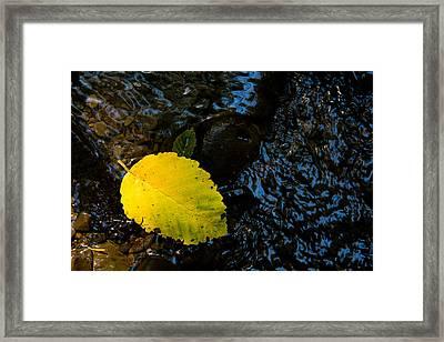 Floating Down The River Framed Print by Sheri Van Wert
