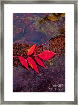Floating Fall Sumac Framed Print