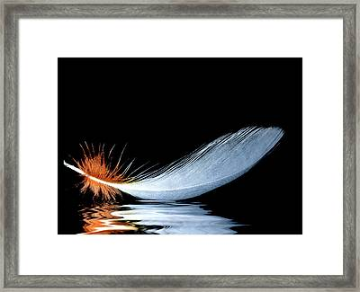 Floating Feather Framed Print by Jean Noren