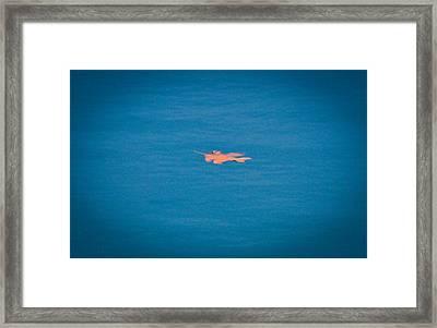 Floating Leaf Framed Print by Erica McLellan