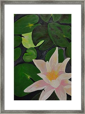 Floating Lotus 2 Framed Print by Holly Donohoe