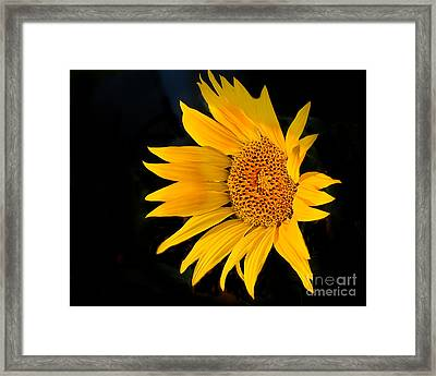 Floating Sunflower Framed Print by Robert Bales