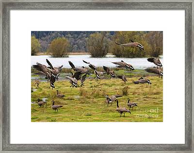 Flock Framed Print by Billie-Jo Miller