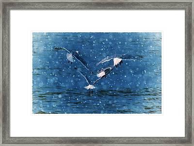 Flock  Framed Print by Debra  Miller