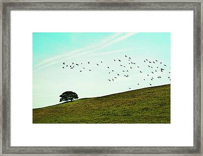 Flock Of Birds Framed Print by Where Photography meets Graphic Design.