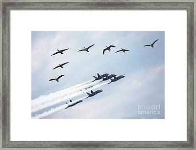 Flock Of Canada Geese At Air Show Framed Print by Oleksiy Maksymenko