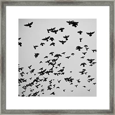 Flock Of Flying Pigeons Framed Print by Photography by Ellen L. Soohoo