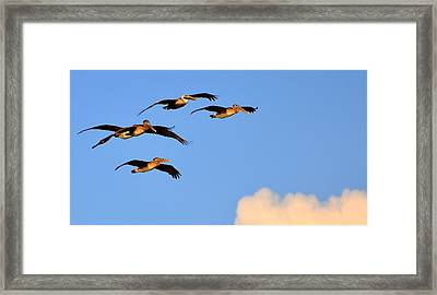 Flocked Framed Print by Barry R Jones Jr