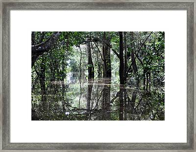 Flooded Amazon Rainforest Framed Print by Oliver J Davis Photography