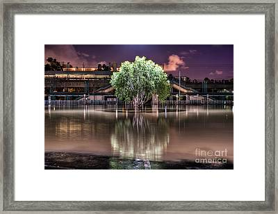 Flooded Tree Framed Print