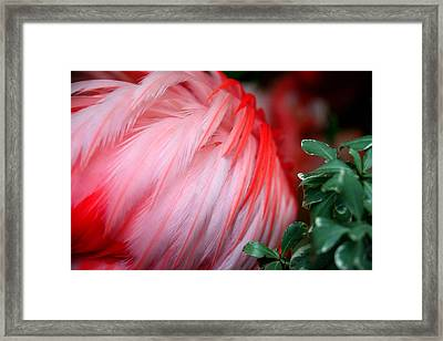 Framed Print featuring the photograph Flora And Fauna Number One by Lon Casler Bixby