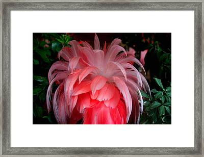 Framed Print featuring the photograph Flora And Fauna Number Two by Lon Casler Bixby