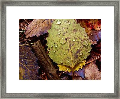Flora Autumn Leaves On The Forest Floor Framed Print