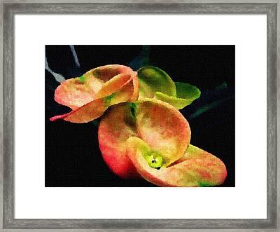 Flora Framed Print by Sanjay Avasarala