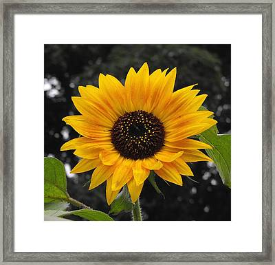 Flora Sunflower Framed Print
