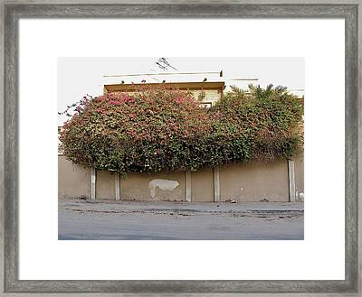 Florae In Doha Framed Print by David Ritsema