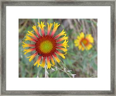Floral Art Framed Print