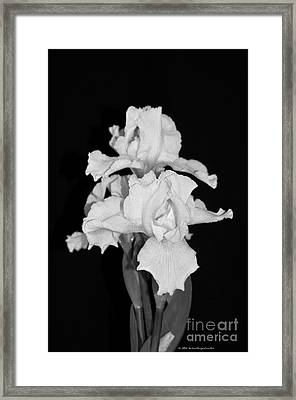 Floral Black And White Iris Flower Bouquet Framed Print