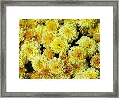 Floral Carpet Framed Print by Sonali Gangane