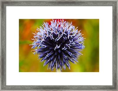 Floral Colors Framed Print