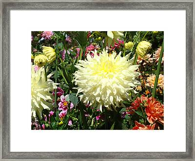 Floral Dahlia Garden Flowers Art Prints Gifts Framed Print